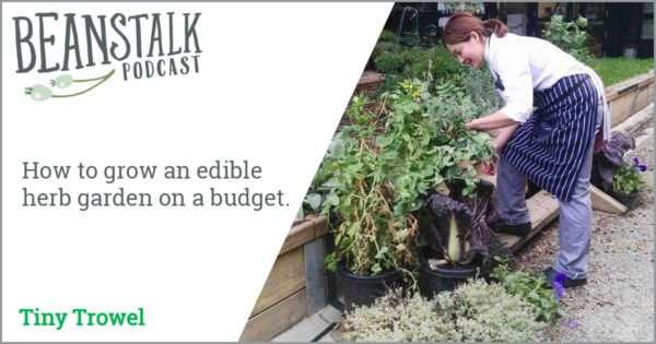 Herb garden on a budget