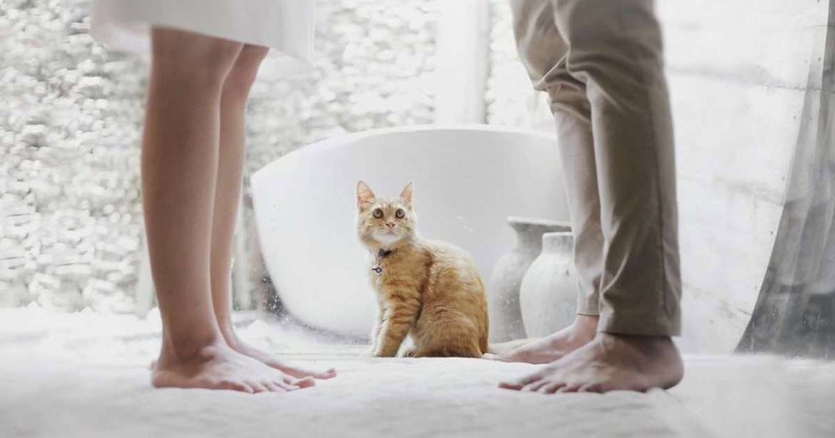 What happens to our pets when we divorce? | Beanstalk Single Mums