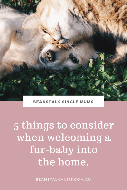 5 things to consider when welcoming a fur-baby into the home | Beanstalk Single Mums Pinterest
