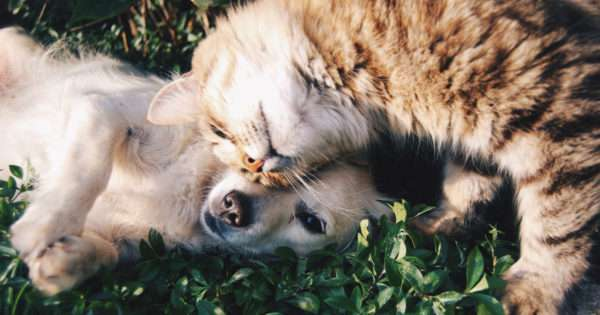 5 things to consider when welcoming a fur-baby into the home | Beanstalk Mums