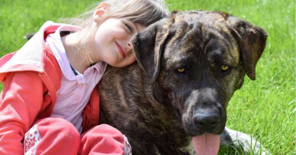What you need to know before getting a dog | Beanstalk Mums
