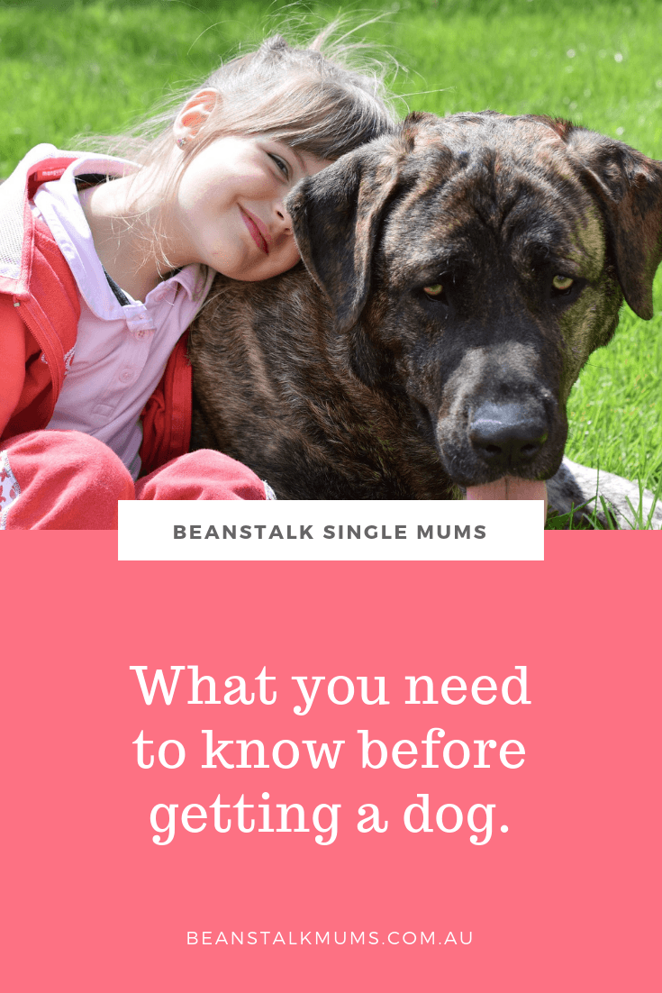 What you need to know before getting a dog | Beanstalk Single Mums Pinterest