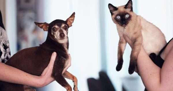 Do I need pet insurance?   Beanstalk Single Mums