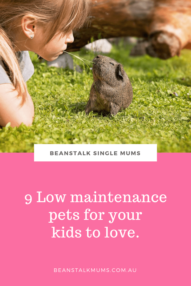9 Low maintenance pets for your kids to love | Beanstalk Single Mums Pinterest