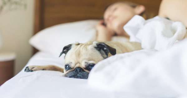 7 Sleep tips for women who long for a good night's sleep | Beanstalk Mums