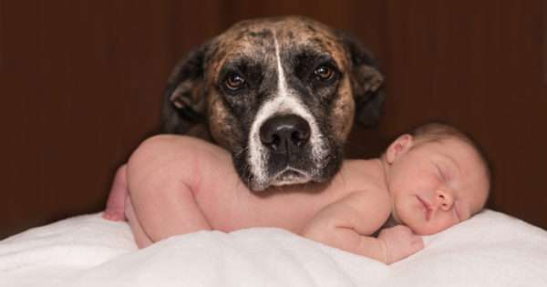 8 Tips for pet owners with newborn babies | Beanstalk Single Mums