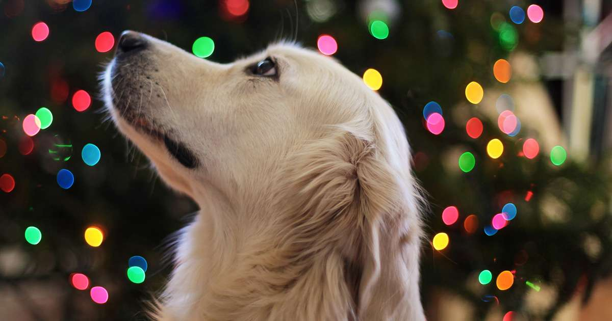 Safe & toxic foods for your pet this festive season   Beanstalk Mums