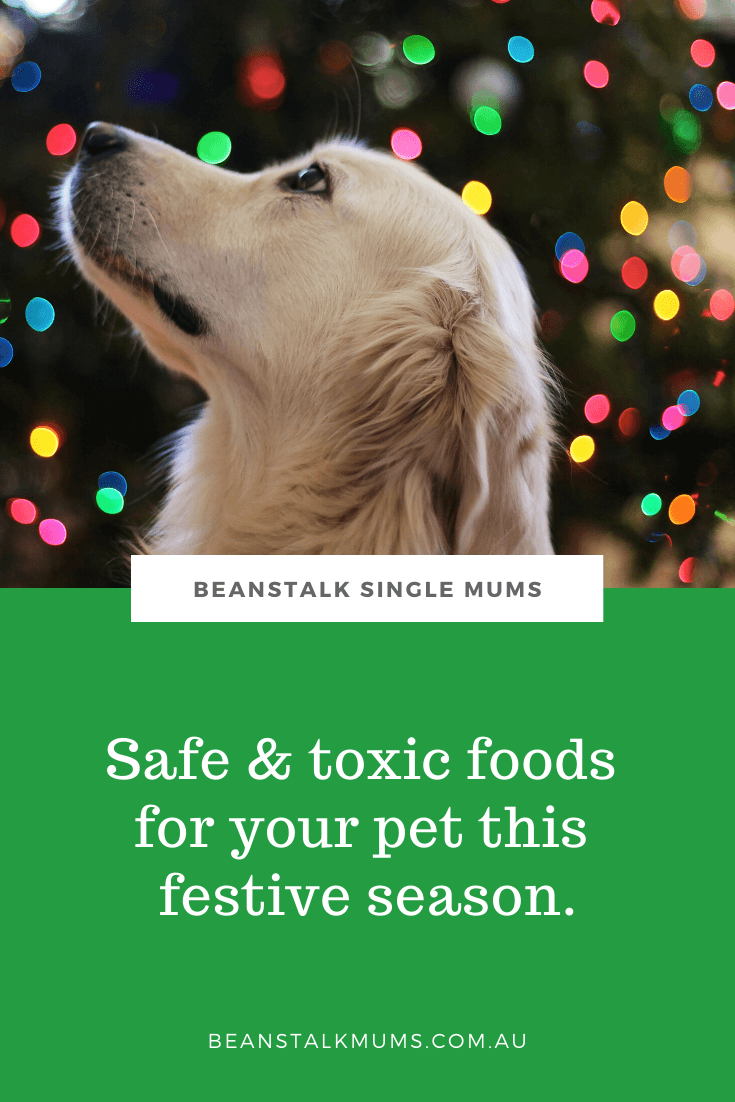 Safe & toxic foods for your pet this festive season | Beanstalk Single Mums Pinterest