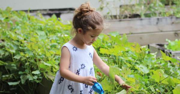 Tips for growing food with your children   Beanstalk Mums