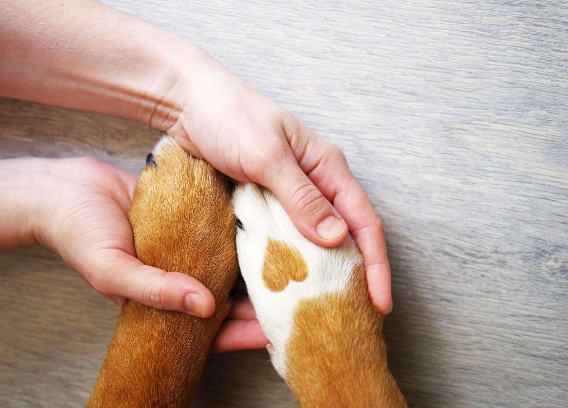 Children caring for animals